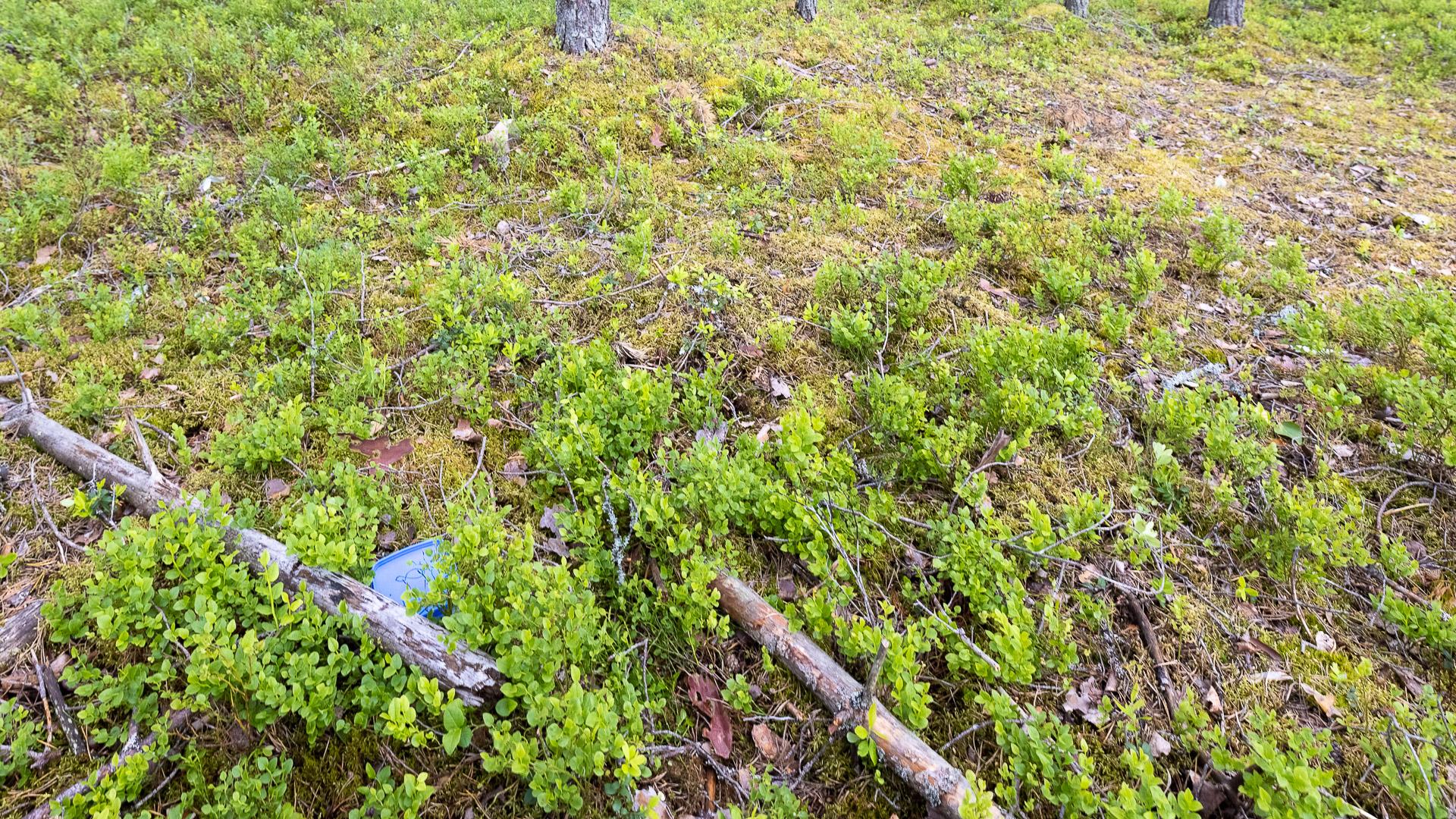 Aktiviteetit Jämimaat Ekokätkentä kohde metsässä