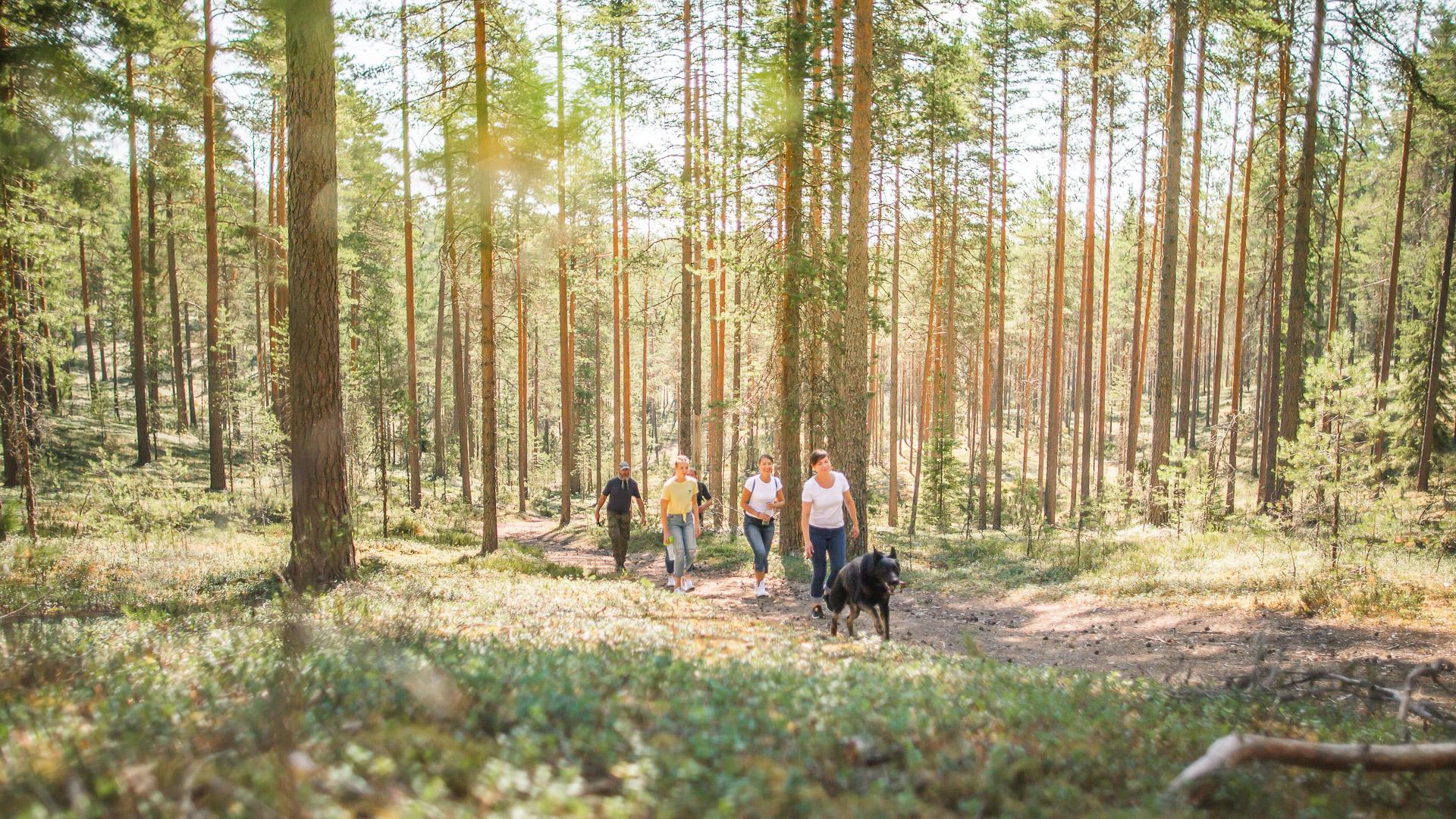 Visit Tampere Korsuretket Patikointi Hiking Forest Nature Laura Vanzo 27