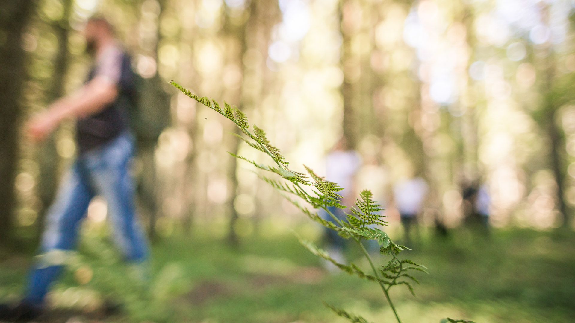 Visit Tampere Korsuretket Patikointi Hiking Forest Nature Laura Vanzo 9